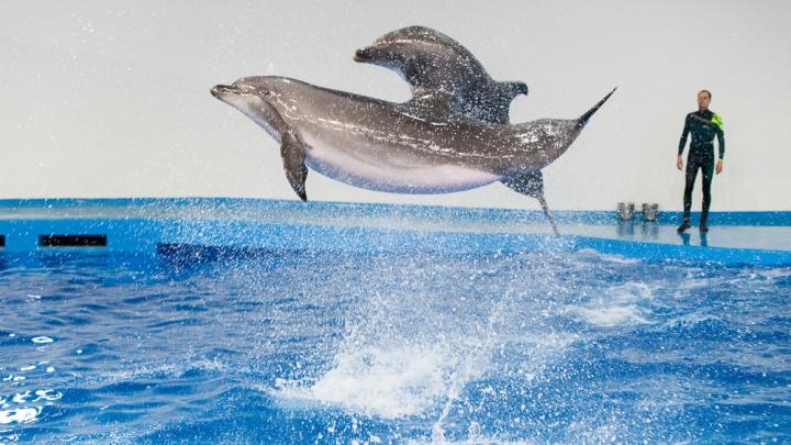 Там еще и котик есть: смотрим шоу дельфинов из екатеринбургского океанариума за 2 недели до открытия