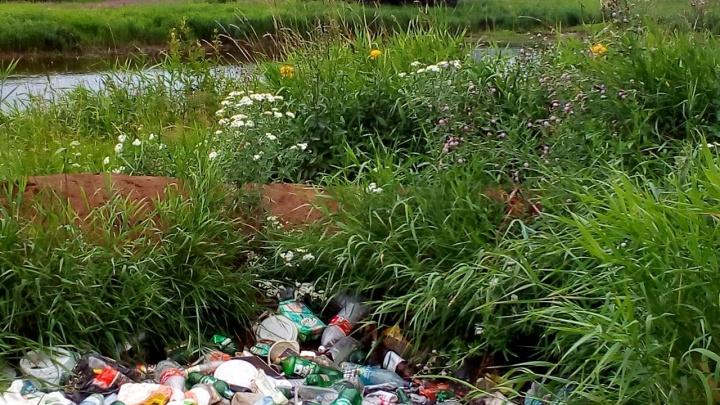 Пермяков приглашают на экологический квест в Закамске. Как принять в нем участие?