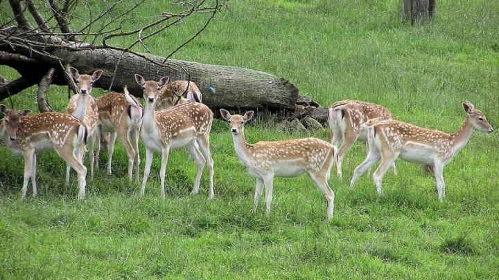 На территории «Кроношпана» появится мини-зоопарк