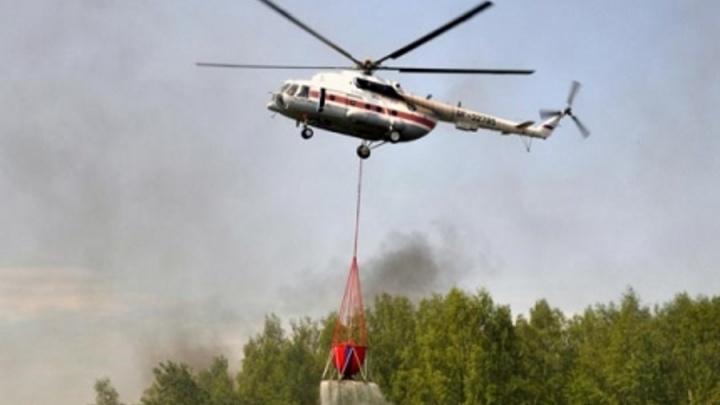 Авиакомпания изменила название в поддержку сибирских лесов и решила посадить 1 млн деревьев