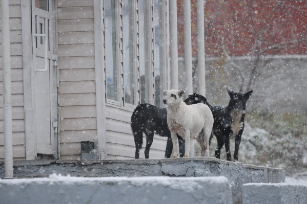 Животные либо рождаются на улице, либо оказываются там, потому что становятся не нужны