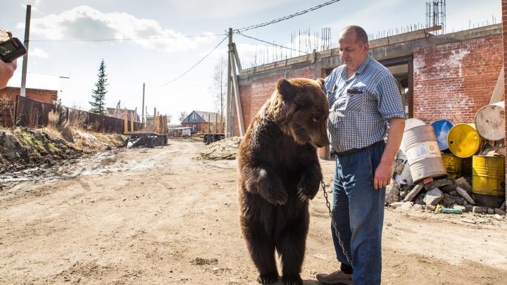 «Гуляем с Марусей, травку щиплем»: история бизнесмена, который завел себе медведя