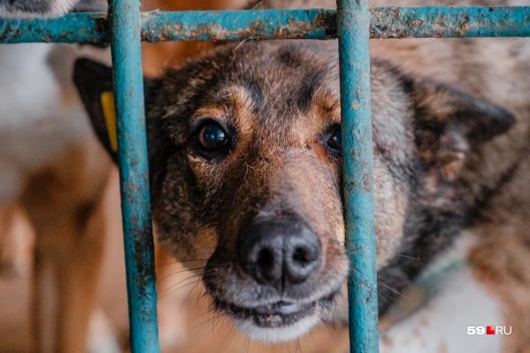 Собаки ждут — может, кто-то их все же заберет?