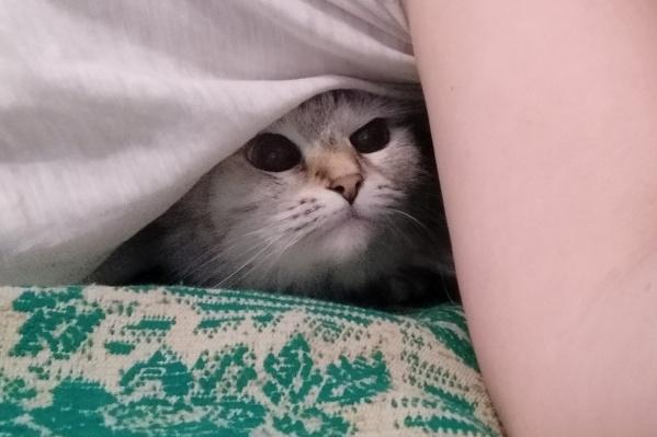 В холодных квартирах Волгограда коты выживают как умеют