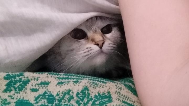Сердца у вас нет! Замерзающие волгоградские котики — коммунальщикам