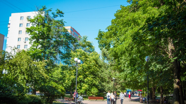 В Ростове 80% деревьевгрозят рухнуть на головы прохожим