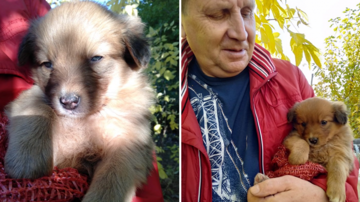 Омичи спасли трёх щенков, провалившихся в трубу