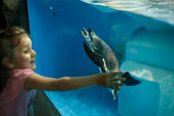 Сейчас в океанариум уже завезли воду и первых обитателей