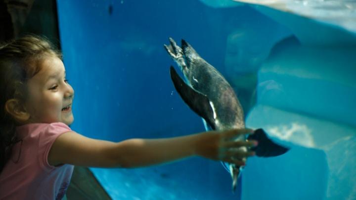 В самарском океанариуме сообщили предварительные даты открытия