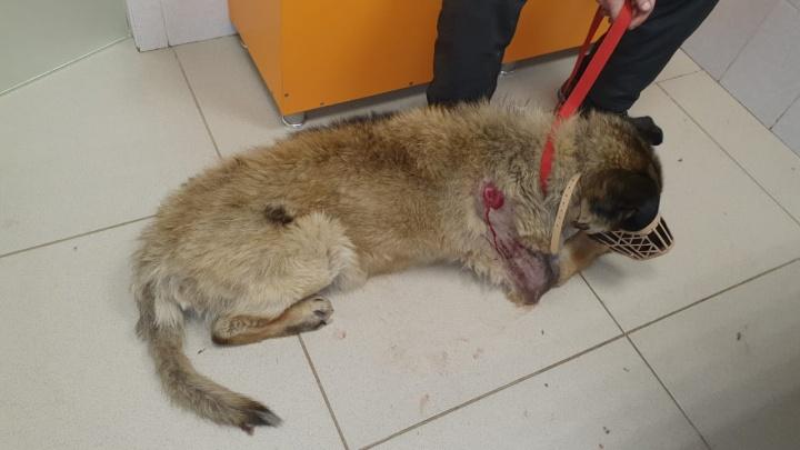 Волонтеры нашли на Уралмаше щенка с огнестрельным ранением