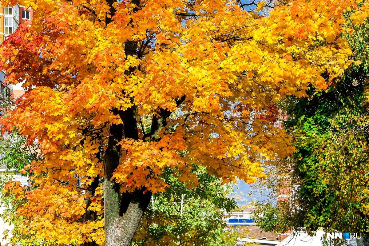 Засентябрило за окном — приходит осень