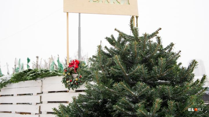 Что лучше: ветви, венки или деревья? Гуляем по елочным базарам Екатеринбурга