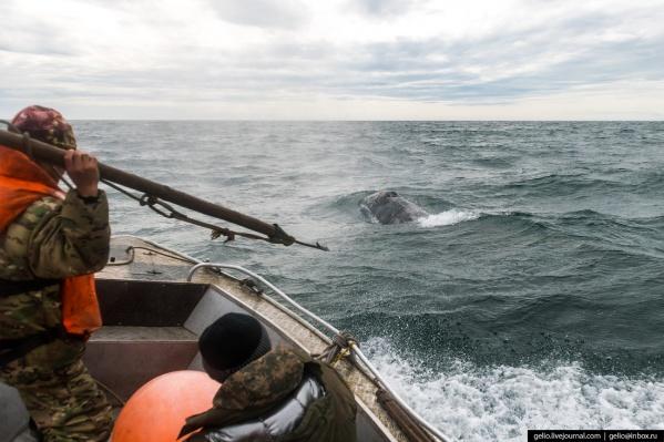Коренной народ Чукотки — один из немногих, кому официально разрешено охотиться на китов. Для жителей отдалённых посёлков, расположенных в вечной мерзлоте, поход на опасный промысел — это способ выжить и прокормить семью