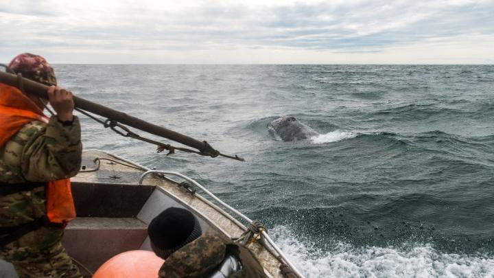 Слава Степанов стал свидетелем китовой охоты в Беринговом море: 10 кадров, как это было