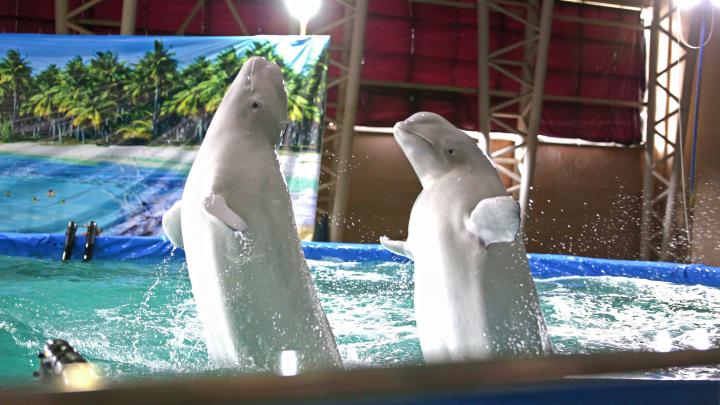 В Минздраве Башкирии опровергли эффективность дельфинотерапии