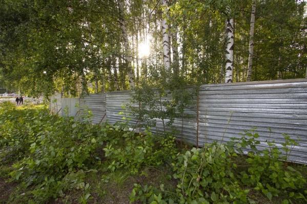 Власти попросили епархию демонтировать забор в рыбинской роще