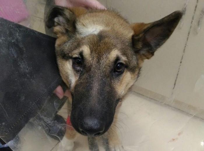 Пёс Грей сейчас в нормальном состоянии, хотя ещё в начале недели пострадал от нескольких ножевых ранений