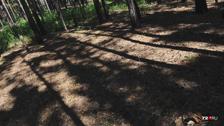Потерявшаяся пенсионерка больше суток блуждала в тюменском лесу. Она вышла на звук громкоговорителя