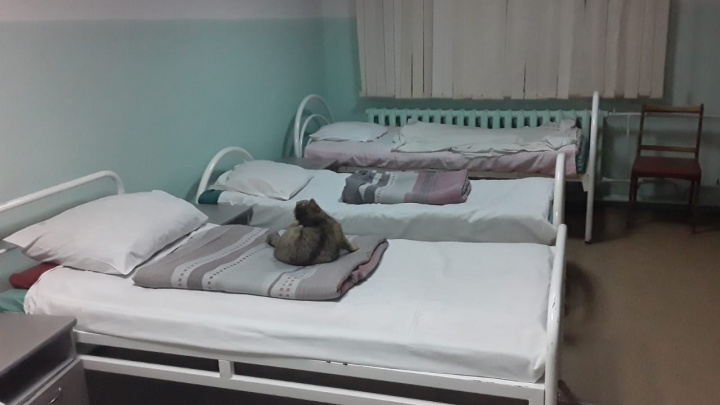 Жительница Башкирии пожаловалась Хабирову на кошку, которая живет в хирургическом отделении больницы