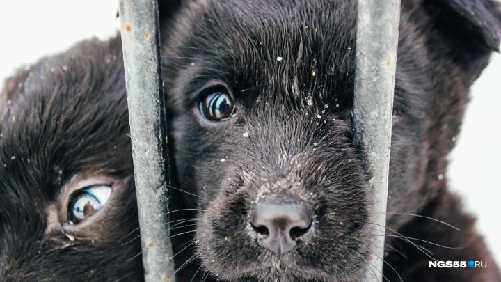 Дети за решеткой: в омском приюте Новый год встретят 70 щенков