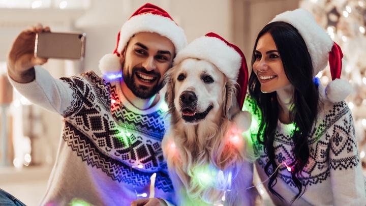 Нет сил держаться: сибиряков накрыло новогоднее настроение и они ищут способы, как еще украсить дом