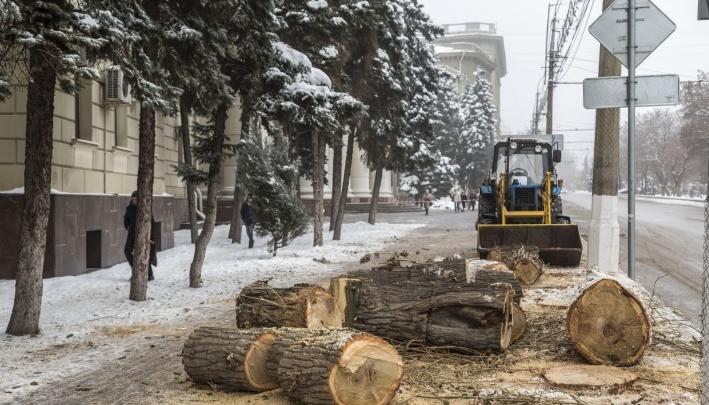 «Только за счёт штрафов от вырубки»: в Волгограде будут по новой финансовой схеме высаживать деревья