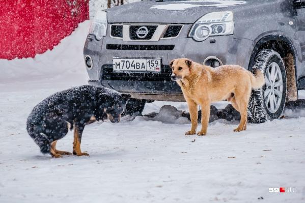 Меньше всего собак живет в административном центре города