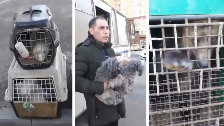 «Этого дрессировщика бы туда»: в челябинском «Академе» нашли автобус с медведем, лисами и енотами
