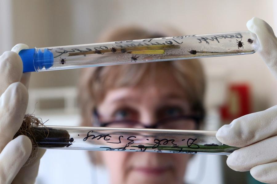 ВНовосибирской области появились энцефалитные клещи