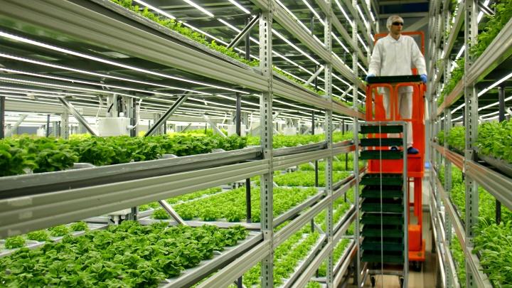 «Лексус» c грядками: в здании разорившегося автоцентра заработала ферма по выращиванию зелени
