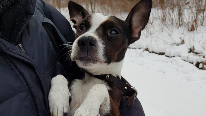 Замерзшую слепую собаку оставили на «Столбах»: теперь ей ищут нового хозяина