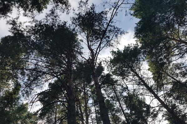 Зауралец заготавливал дрова недалеко от села Верхний Суварыш