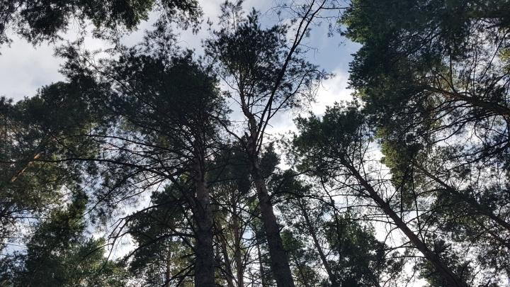 В зауральском лесу погиб 23-летний мужчина