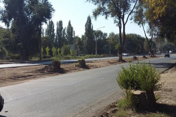 Горожане требуют высадить новые деревья