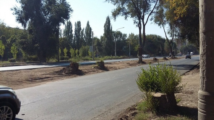 На Заводском шоссе срубили вековыедеревья