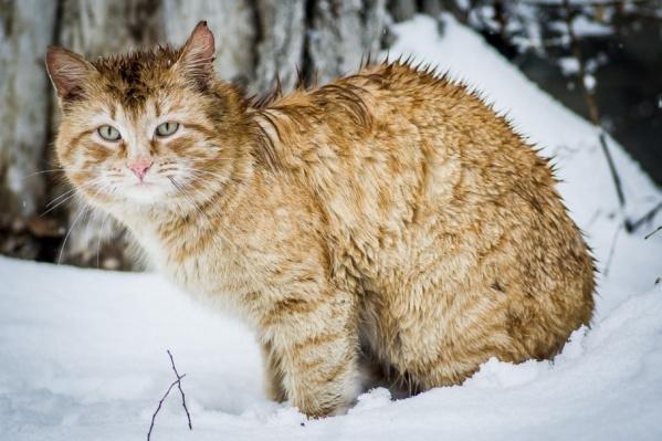Мартовские коты в шоке от этой весны