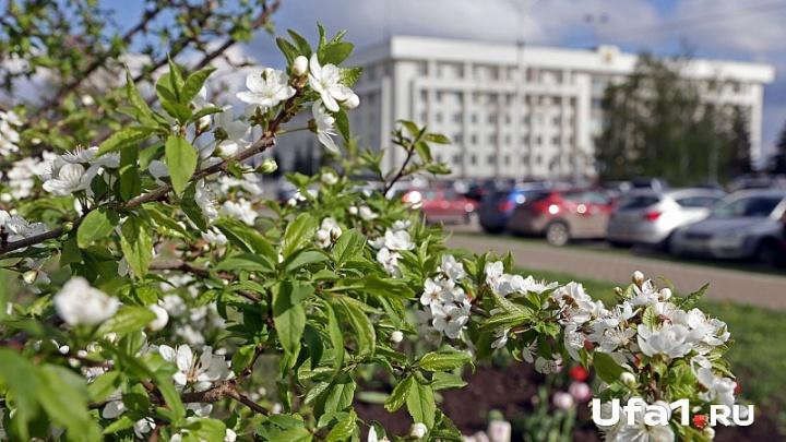 Погода в Башкирии: воскресенье будет пасмурным и дождливым