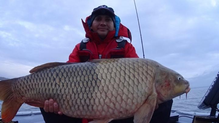 Новосибирец поймал 13-килограммового речного поросёнка
