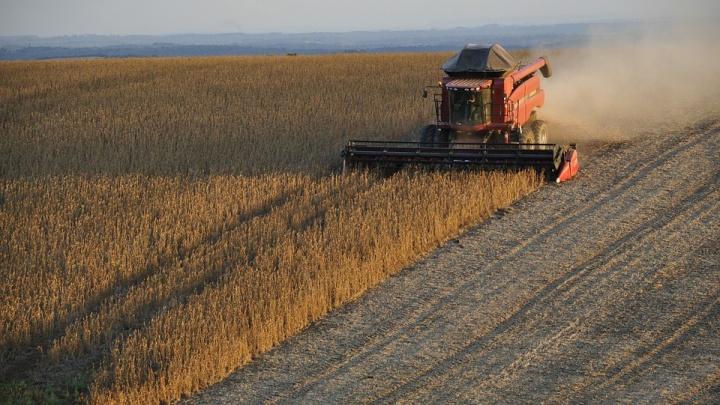 В 2019 году Россельхозбанк увеличил льготное кредитование сезонно-полевых работ на 15%