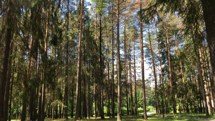 Объявили сбор волонтеров: под Краснокамском в лесу пропала 84-летняя пенсионерка