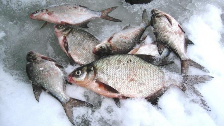 Где заняться зимней рыбалкой в Свердловской области: уральцам дали ответ