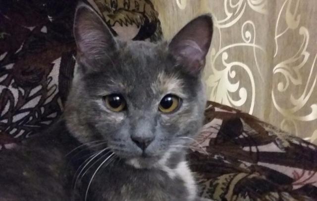 В Уфе спасенная из шахты кошка нашла любящего хозяина и теплый дом