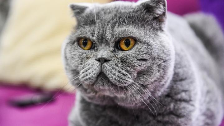 Нужно ли мыть кошку и как понять, что питомцу пора худеть: отвечаем на популярные вопросы о животных