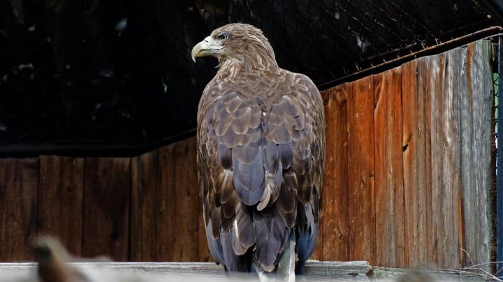 Под Новосибирском заметили хищных птиц из Красной книги — они охотятся на беззащитных уток