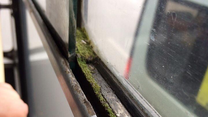 Фото: окна в новосибирском троллейбусе покрылись мхом