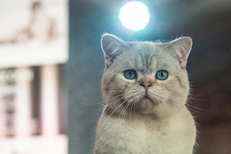 Обычно такие котята стоят очень дорого — ценник может доходить до шестизначных чисел