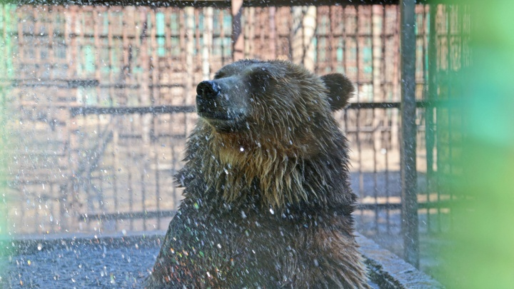 «Здарова, Мишаня!»: житель Башкирии снял на видео дикого медведя у дороги