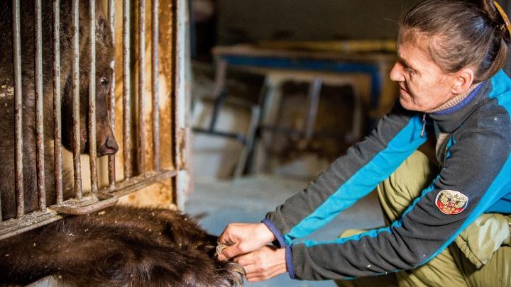 Как за полгода изменилась жизнь безработных медведей. Жизнь в клетках и надежда на Казахстан