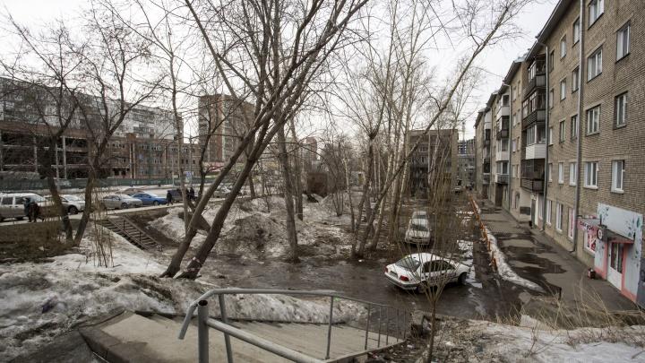 «Просьба не мешать»: у домов на улице Кошурникова пообещали вырубить все деревья