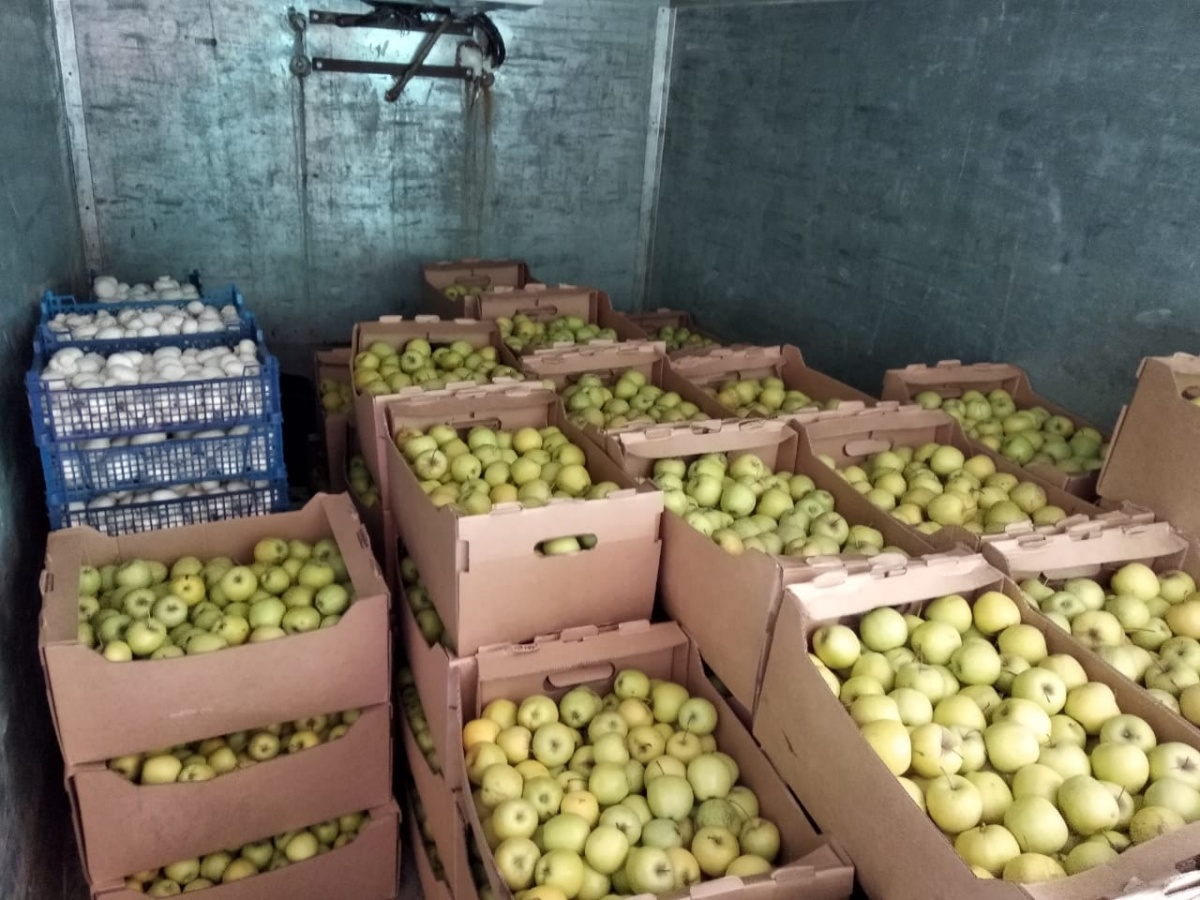 В Екатеринбурге смешали с землей полторы тонны нелегальных грибов и яблок